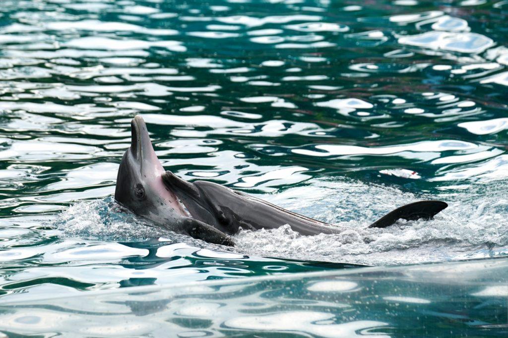 Peace River House Punta Gorda King Fisher Fleet Dolphins