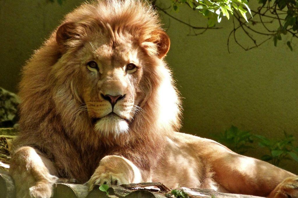 Peace River House Punta Gorda Octagon Wildlife Sanctuary Lion